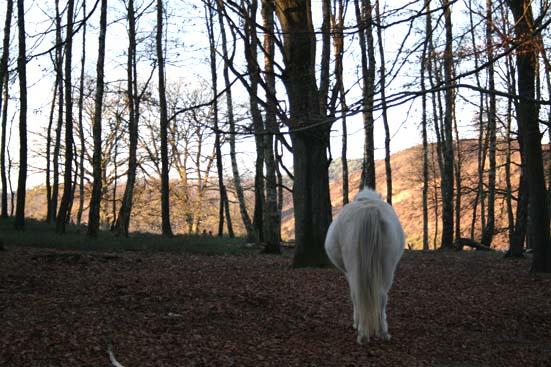 wit-paard-nederland-wild