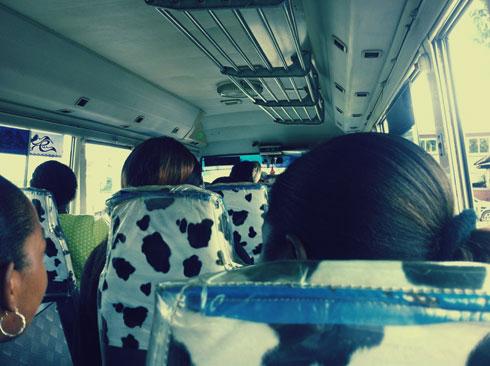 surinama-bus-galliano