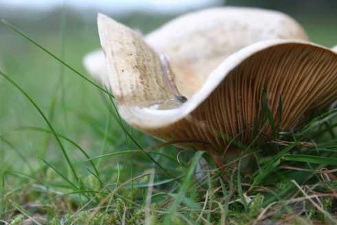 hooikoorts-ambrosie-herfst