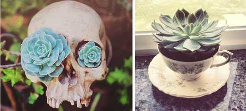 planten- hooikoorts-vriendelijk