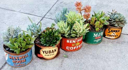 hooikoortsvriendelijke-planten-huis