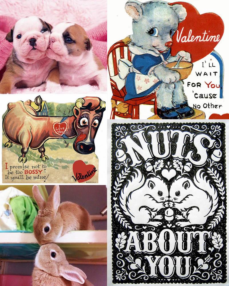 airmagazine -animals-valentijnkaart