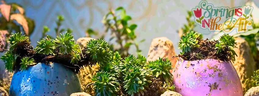 airmagazine-ei-succulent-vetplantje-pasen-header1