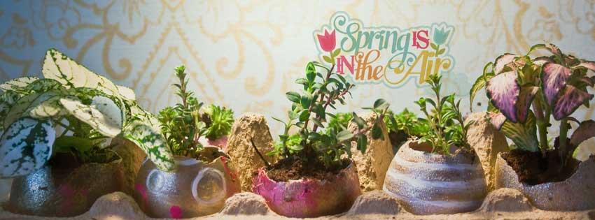 airmagazine-ei-succulent-vetplantje-pasen-header2