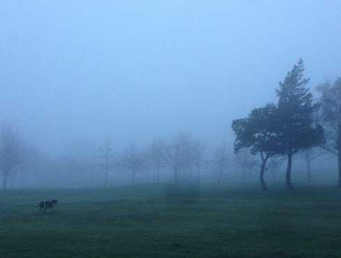 smog-alarm-blijft-uit